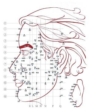 2.reflexologie faciale dien chan profil